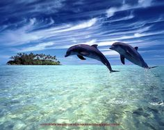 beautiful dolphin pictures | Beautiful Wallpapers: Beautiful Dolphins
