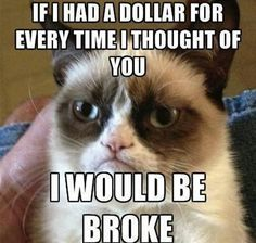 25 hilarious Grumpy Cat memes culled from the Internet. - Tap the link now to see all of our cool cat collections! Grumpy Cat Quotes, Funny Grumpy Cat Memes, Funny Animal Jokes, Cat Jokes, Stupid Funny Memes, Funny Relatable Memes, Funny Animal Pictures, Funny Cats, Funny Animals
