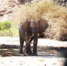 """She looks like """"oops, you catched me"""" . which is some kind of true. Not so many people are driving along the dry riverbed of the Hoanib… Longer Legs, World Of Wanderlust, Elephants, Road Trip, Water, People, Travel, Life, Animals"""