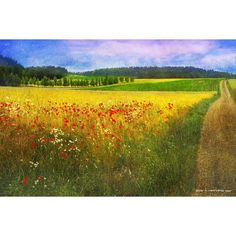 """Marmont Hill - """"Barley And Poppies"""" by Chris Vest Painting Print on"""