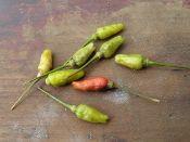 Zimbabwa aribibi gusano Very hot pepper