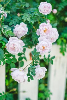 Flowers for the soul Floral Wreath, Wreaths, Rose, Garden, Flowers, Plants, Photography, Home Decor, Florals