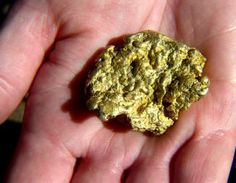 California gold rush nand gold miner gold nuggets