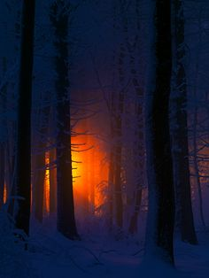 Sunset through snowy forest, Germany, by Stephan Amm