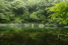 Green Water | by chikuma_riv(sorry very busy (>_<))