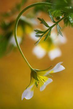 livrer des fleurs 57 #fleurs #bouquet