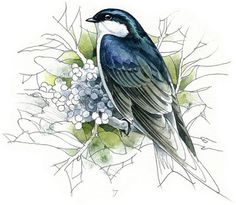 Tree Swallow watercolour bird art wildlife by RobManciniImages