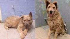 Puppy Adopted From Shelter Is Returned — 10 Years Later