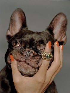 the cutest face...the ring aint bad either..  i will take both ..  http://lulufrost.tumblr.com/post/27069392362/the-cutest #buldog