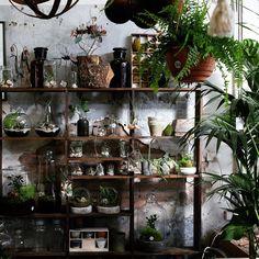"LAURDORA on Instagram: ""Wish I can have a wood shelf with lots of small plants on it at home,behind the dining table or sofa. ------------------------------------------------------------------ #melbourne #melbournecity #melbournelife #ins #instagood #instacool #instagallery #instagram #iger #igers #ig_melb #ignelbourne #igworldclub #fujifilm #fujinon #fujifilmXT1 #fujifilmx_t1 #kinfolk #cerealmag #fotzroynursery #lifeinmelbourne #plant #leaf #creatingshadows #fujifeed"""