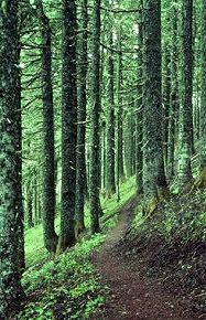 Coast Range's Highest Peak Named Mary - Oregon