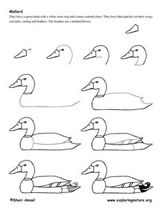 golden mallard main lesson idea story here http://buddhism.about.com/od/sacredbuddhisttexts/a/The-Golden-Mallard.htm