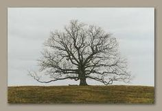 There was a tree that looked like this at girl scout camp - right out in the middle of the field.  Always thought that tree was beautiful.