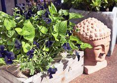 Viljelylaatikot mahdollistavat hyöty- ja koristekasvien kasvatuksen parvekkeella ja terassilla. Katso Viherpihan ohjeet ja nikkaroi itse helpot laatikot laudasta!