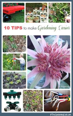 Tips For Planting An Organic PNW Vegetable Garden. Done In Partnership With Fred  Meyer Garden Center. Via @EverydayMaven | Everyday Maven Recipes.