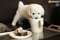 He likes Afternoon Tea for Two as much as us!! http://www.afternoonteafortwo.co.uk/