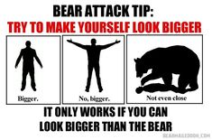 9 Useless Tips That Can Save Your life If a Bear Ever Attacks You - World's largest collection of cat memes and other animals Wild Animals Attack, Animal Attack, Funny Images, Funny Pictures, Funny Pics, Angry Bear, Bear Attack, Types Of Humor, Dark Memes