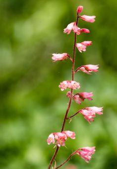 Unbekannte Blume - Unknown Flower