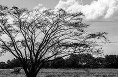 Reposting @mralex_alvarez: Paisajes olvidados | . . . . . #blackandwhite #photography #paisaje #landscape #black #treescape #tree #nature #naturaleza #fotografia #instagood #travel #travelphotography