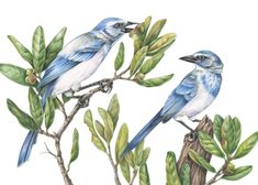 Gallery - Solar Etching - The Art of Mindy Lighthipe Online Art Classes, Migratory Birds, Tropical Birds, Little Birds, Bird Species, Botanical Art, Bird Art, Beautiful Birds, Art Tutorials