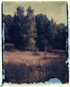 Polaroid Emulsion transfer