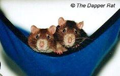 Diy for rat, wonderful site!