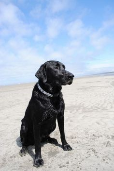Jett at the beach