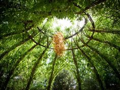 Living willow structure by artist, Bonnie Gale. http://www.livingwillow.info/