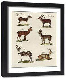 Roe Antler Wooden Photo Frame 6 x 4 Landscape or Portrait Hunting Gift