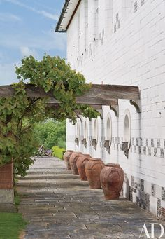 A row of terra-cotta amphorae under climbing grapevines.