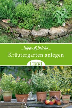 Tips and tricks for your herb garden - Herbs are real all-rounders: they not only impress in terms of taste, but also visually in your own - Tomato Garden, Herb Garden, Garden Tools, Rooftop Garden, Indoor Garden, Outdoor Gardens, Easy Plants To Grow, Real Plants, Luz Natural