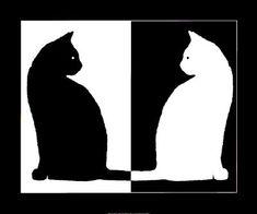 Black and White Cats Kunst bij AllPosters.nl