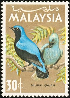 Asian Fairy-bluebird stamps - mainly images - gallery format