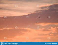 Two birds flying away at sunset time. Photo about petals, blossom, romantic, clouds, couple, animals, beautiful, flowers, blossoms, bees, floral, photograph, petite - 141272428