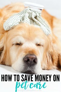 How+To+Save+Money+On+Pet+Care