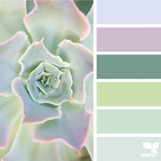 today's inspiration image for { succulent hues } is by @christieadelle ... thank you, Christie, for sharing your gorgeous photo in #seedscolor !