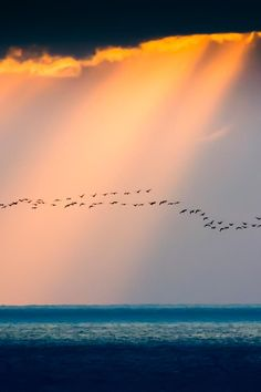I once saw a flock of wild flamingoes flying over the sea as I sat on the beach. It was a truly beautiful sight and this image reminds me so much of them.