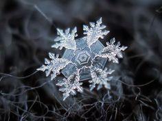 Sneeuwvlokken van Alexey Kljatov - macro-fotografie on http://on.dailym.net/Ql5CUl - Sneeuwvlokken van Alexey Kljatov – macro-fotografie – DailyM – een prachtig beeld van de enorme verscheidenheid van sneeuw.  - http://cdn.dailym.net/mag/wp-content/uploads/2014/05/snowflake-10.jpg