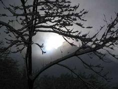 ▶ Peter Koelewijn - De sprong in het duister - YouTube