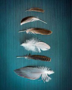 Feathered Nest - Teal Blue Coastal Wall Art