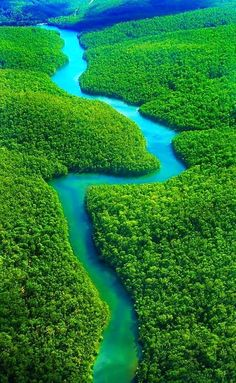 The Amazon Rainforest, Brazil-10 Worlds Amazing Forests