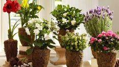 Pridala do kvetináča 1 lyžičku cukru – výsledok bol úžasný! Tie najlepšie prírodné hnojivá pre izbové rastliny!