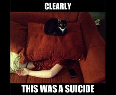funny cat meme with a black-and-white cat sitting atop a red cushion that is sitting on top of his owners head