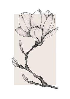 Beautiful Flower Drawings, Flower Art Drawing, Flower Drawing Tutorials, Flower Sketches, Floral Drawing, Line Drawings Of Flowers, Plant Drawing, Pencil Art Drawings, Art Drawings Sketches