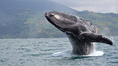 Think like a whale - Genius.  An Autonomous Sub Speaks Whale To Explore The Deepest Ocean