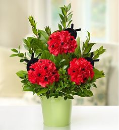 Send beautiful flower arrangements to brighten someone's day! Whether looking for a floral arrangement of roses or mixed flowers, find something perfect! Beautiful Flower Arrangements, Floral Arrangements, Beautiful Flowers, Fresh Flower Delivery, Same Day Flower Delivery, 800 Flowers, Fresh Flowers, Sympathy Plants, Im Sorry Gifts
