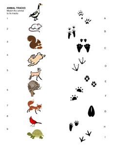 Animal Tracks Matching Sheet for pre-k, kindergarten, Art Activities, Toddler Activities, Cub Scouts Wolf, Bushcraft Skills, Bushcraft Gear, Bushcraft Camping, Animal Footprints, Kindergarten, Animal Tracks