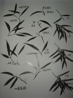 竹子的画法 - jsh888888_love - 双休日