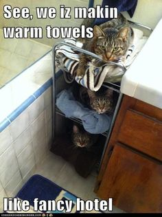 Considerate kitties. =^..^= http://www.kittyprettygifts.com #cats #cute #memes #lolcats