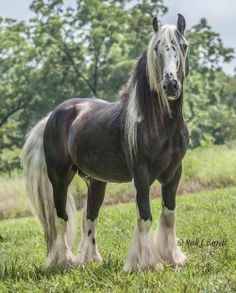 beautiful stallion by Mark J. Barrett